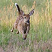 Bounding Bambi Art Print