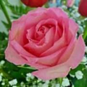 Bouquet Rose Art Print
