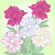 Bouquet With White And Pink Peonies.spring Art Print