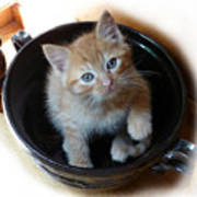 Bowlful Of Kitten Art Print