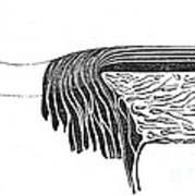 Bowmans Membrane, Retinal Layers, 1842 Art Print