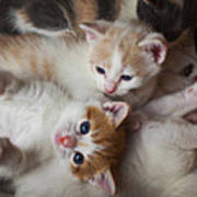 Box Full Of Kittens Art Print by Garry Gay