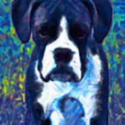 Boxer 20130126v5 Art Print by Wingsdomain Art and Photography