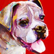 Boxer Dog  Art Print