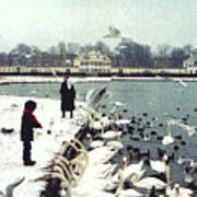 Boy Feeding Swans- Germany Art Print