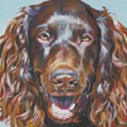 Boykin Spaniel Art Print