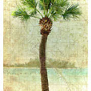 Bradenton Palm Art Print