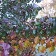 Bradford Pear Tree With Berries Art Print