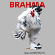 Brahma Breeders Rock Red Art Print