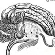Brain And Eye, Descartes, Illustration Art Print