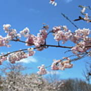 Branch Of Blossoms Art Print
