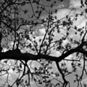 Branch Patterns Art Print