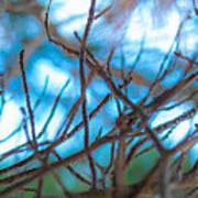Branches 24 Art Print