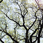 Branches Against Sky In Spring Outback Art Print