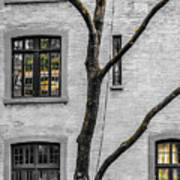 Branches And Windows Art Print