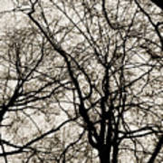 Branches Intertwined Art Print