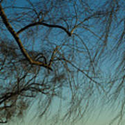 Branches Of A Weeping Willow Tree Art Print