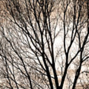 Branches Silhouettes Mono Tone Art Print