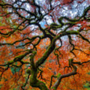 Branching Out In Autumn Art Print