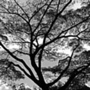 Branching Out In Bw Art Print