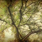 Branching Upward Art Print