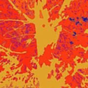 Brandywine  Maple Fall Colors 4 Art Print