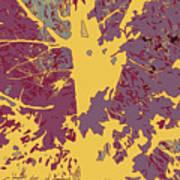 Brandywine  Maple Fall Colors 7 Art Print