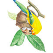Brazilian Parrot Art Print