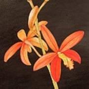 Brazilian Red Laelia-miniature Orchid Art Print