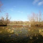 Brazos Bend Winter Wetland Art Print