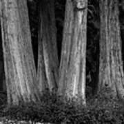 Breadth Of Trees Art Print