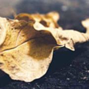 Breaks Of Autumn Art Print
