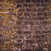 Vine Up A Brick Wall  Art Print