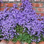Brick Wall With Blue Flowers Art Print