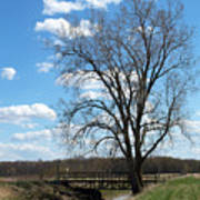 Bridge And A Tree Art Print