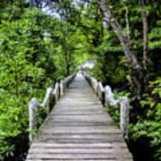 Bridge In Kosrae Art Print