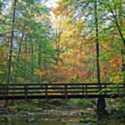 Bridge In The Forest Art Print