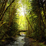 Bridge In The Rainforest Art Print