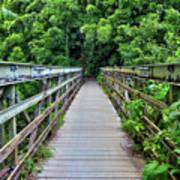 Bridge To Bamboo Forest Art Print