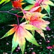 Bright Autumn Leaves Tatton Park Art Print