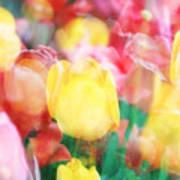 Bright Dreams In The Tulips Art Print