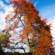 Bright Fall Colors Art Print