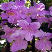 Bright-lillac Flowers 6-22-a Art Print