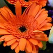 Bright Orange Daisy Art Print