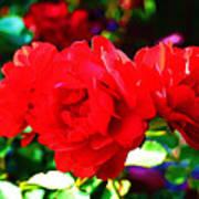 Bright Red Rose Art Print