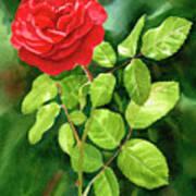 Bright Red Rose With Dark Background Art Print