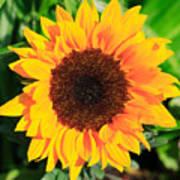 Bright Sunflower Art Print