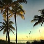 Bright Sunshine Greets The Palms Art Print