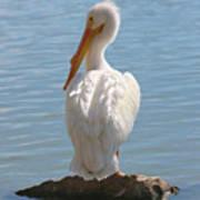 Bright White Pelican Art Print