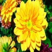 Bright Yellow Dahlia Flower Art Print